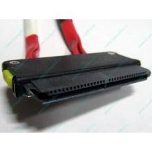 SATA-кабель для корзины HDD HP 451782-001 459190-001 для HP ML310 G5 (Иваново)